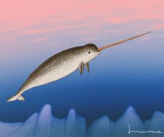 Narwhal 3 by Louisetheanimator