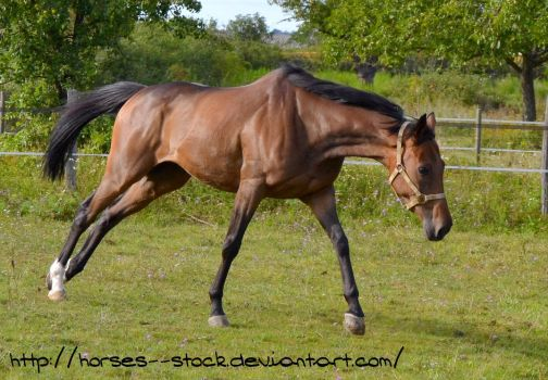 Justification - Stock 16 by Horses--Stock