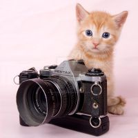 the photographer by PhotoGraphChick