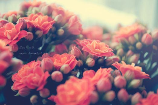 FLOWERS(? by JuliieditionsPSC