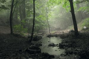 Forest stream by ohlopkov