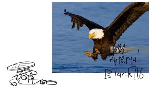 the bald eagle is a symbol of American freedom by ArterialBlack716