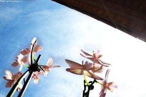 sunshine and orchids by Flairen
