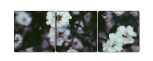 F2U DIVIDER | flowers by danisaesthetics