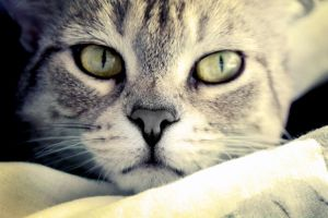 --cat- by foto-by-me