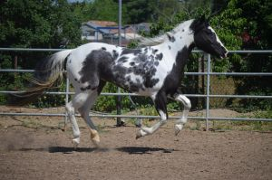 DWP FREE HORSE STOCK 46 by DancesWithPonies