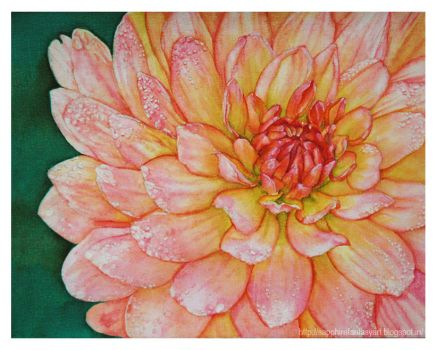 Another Dahlia by rosalinvinci