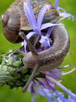 SNAIL by Iris-cup