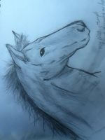 My First Attemp at a Horse by UncommonCommonSense