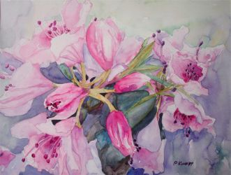 Pink Rhododendron by p-e-a-k