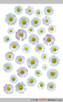 PACK Daisy - STOCK by resMENSA