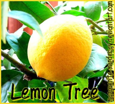 Lemon Tree by Marguerite-Mordecay