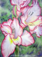 Gladiolus by IvieMoon