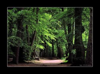 The lure of the forest . by 999999999a