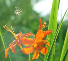 Beautiful Orange Flower with Spider Web by todaywiththeCJB