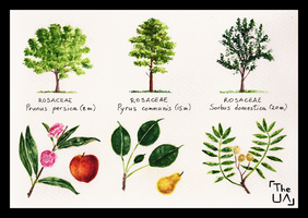 Tree Study - Broad Leaved 18 by TheUnconfidentArtist