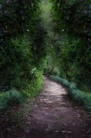 Dark Path 1 by Jeni-Sue