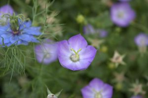 Some Flower by sidharth0384