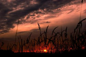 Sunset 70 by Lexia84