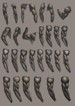 Arm Studies by JoshSummana