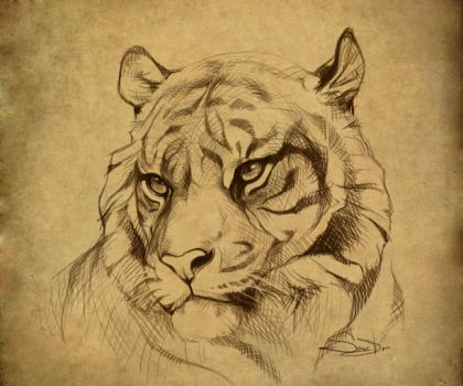 Tiger by SalamanDra-S
