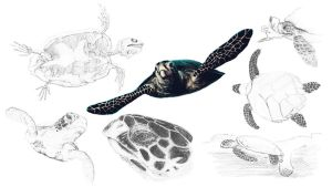 Sea Turtle Sketches by JEnilorac