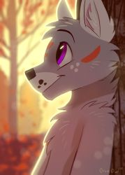 Autumn Forest by OrcaOwl