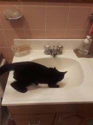 Kitty in Sink by SharkGirl15