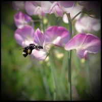 Bee Celebrated by TeaPhotography