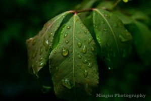 Muted Color Rain Leaf by justarus