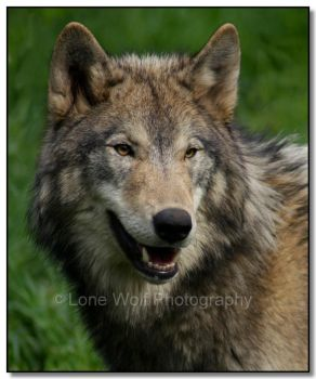 Portrait of Perfection by LoneWolfPhotography