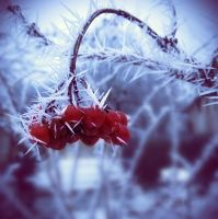 cold needles. by liv-colour