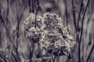 Flowers at Parsons Garden.2 by jakelauer