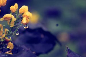 With Spring, Comes Rain. by plainandsimplephotos