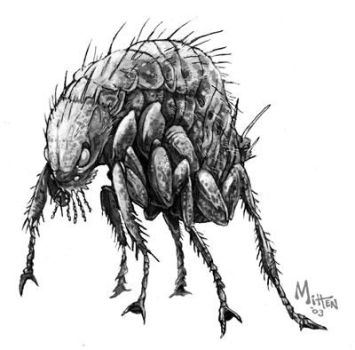Phase Flea by caramitten