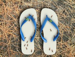 flip flop ants by Titareco