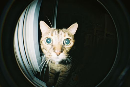 Fisheye Mellow's Cat by kromanfromcrs