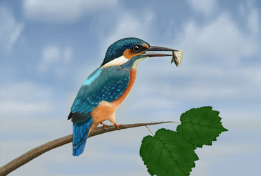 Kingfisher by LauriieT