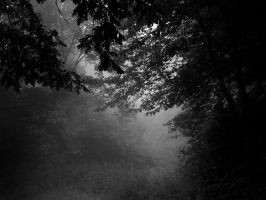 ... In the forest by VesnaRa014