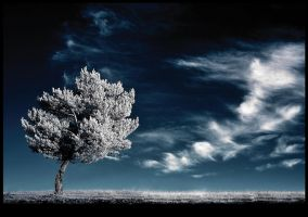 ultimate sigh - infrared by Konczey-Zsolt