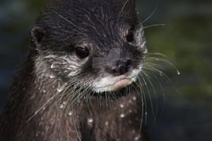 Wet Whiskers by carterr