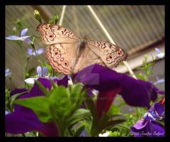 Butterfly House III by Jenna-Rose