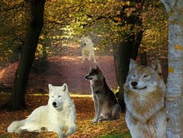 Wolfs in the Forest by Hexenkatze