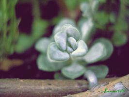 Cactus II by world-by-danielle