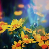 Yellows and Blues by LashelleValentine