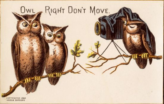 Owl Right Don't Move by Yesterdays-Paper