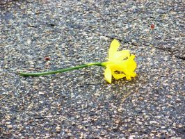 Yellow Flower I by CryRainDrops