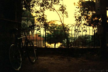 broken bicycles II by Anahita