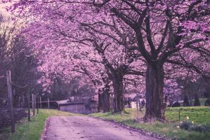 Follow the yellow pink road by FurImmerUndEwig