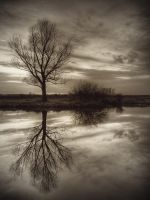Reflection by jeremi12